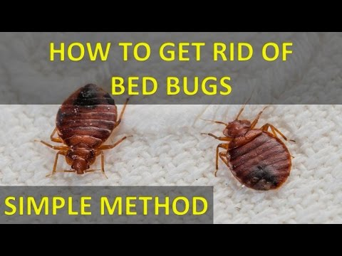 How To Get Rid Of Bed Bugs From A Mattress Different Truths