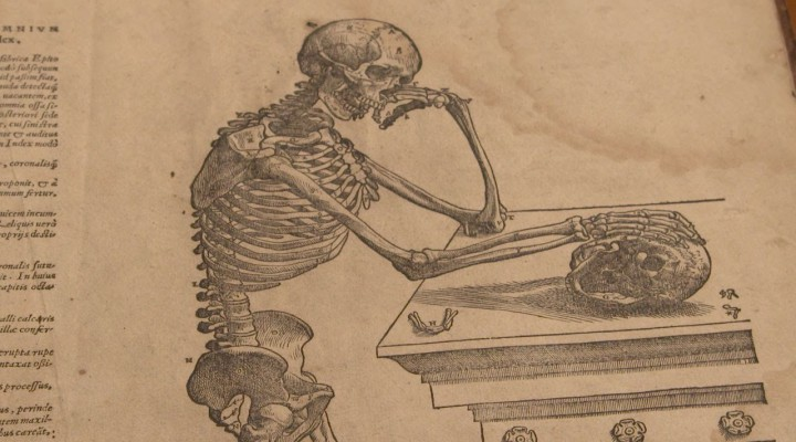 How was the Human Anatomy Discovered? | Different Truths
